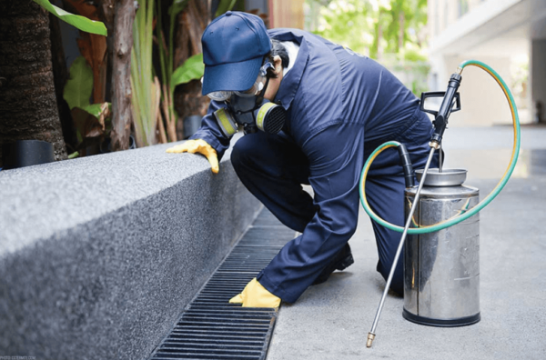 Why Professionals Should Do Pest Control