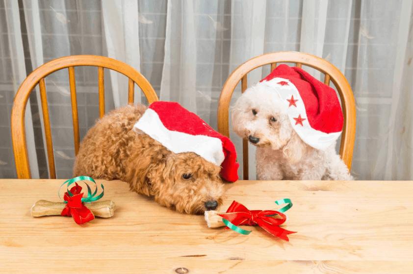 Dog Eat at Christmas