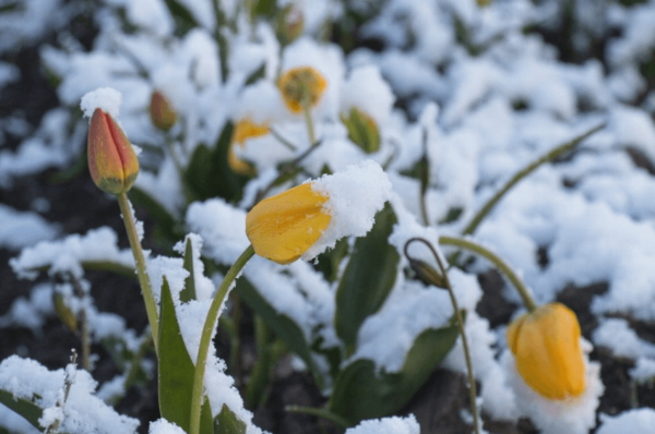 How to Give Your Garden Some Love this Winter